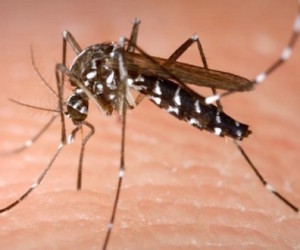 507765_dengue_muerte_mexico_2014